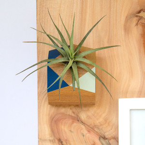 faceted wall planter display