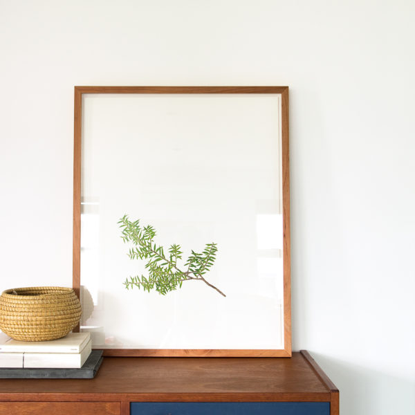 Botanic Study Prints, 500x700 Totara