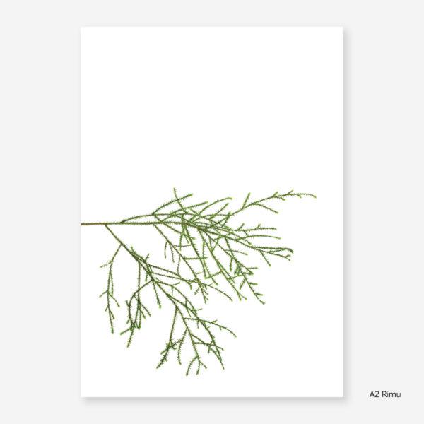 Botanic Study Prints, A2 Rimu
