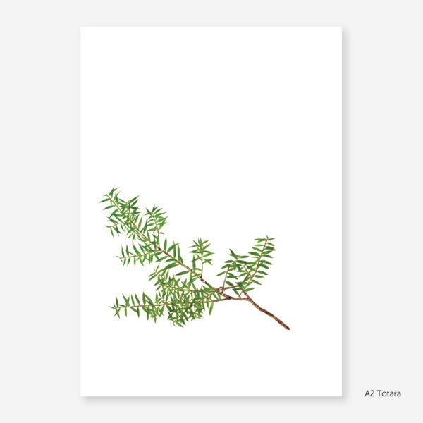 Botanic Study Prints, A2 Totara