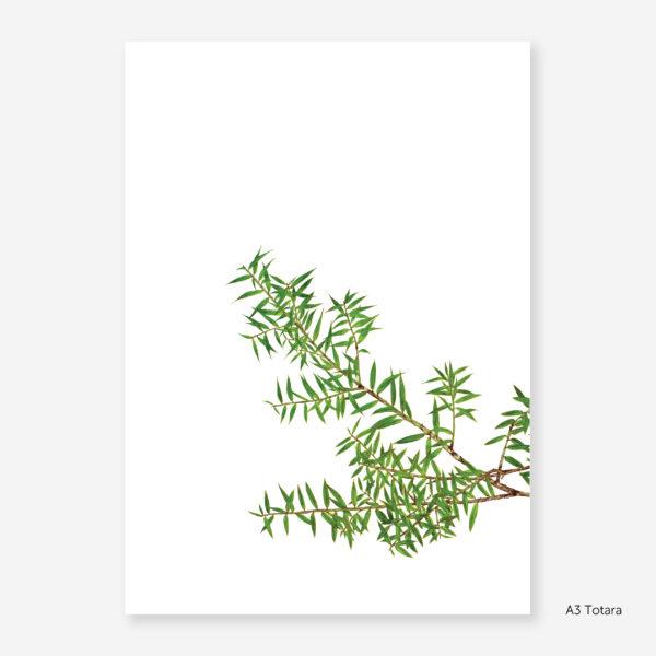 Botanic Study Prints, A3 Totara